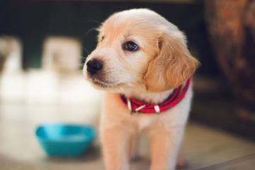 Sophia-Vereeniging beschermt honden en andere huisdieren